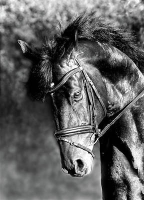 Photograph - Free Flowing Friesian  by Athena Mckinzie