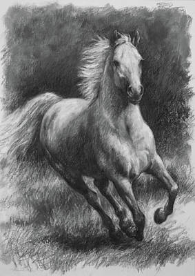 Drawing - Free Gallop by Meridith Martens