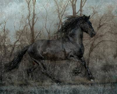 Black Friesian Photograph - Free II by Jean Hildebrant