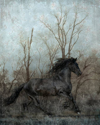 Black Friesian Photograph - Free by Jean Hildebrant