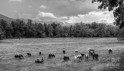 Photograph - Free Range Horses Cades Cove Art by Reid Callaway