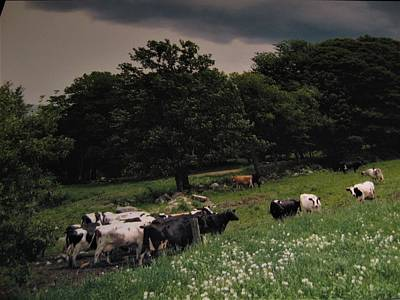Photograph - Free Range by John Scates
