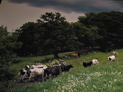 Photograph - Free Range by John Scates