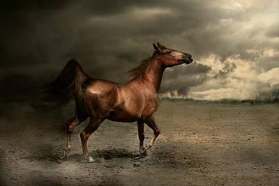 Livestock Photograph - Free Spirit by Dorota Kudyba