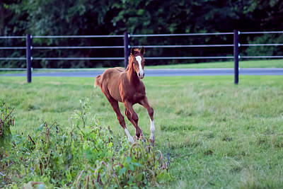 Latidude Image - Free Spirited Foal by Bonnie Phillips
