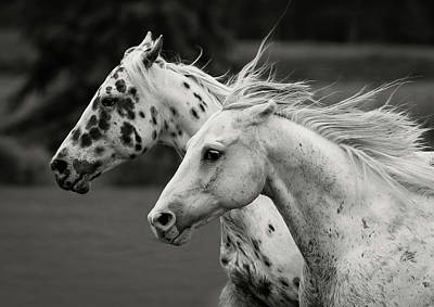 Black Unicorn Photograph - Free Spirits by Athena Mckinzie