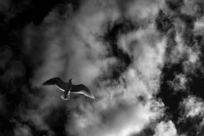 Photograph - Freebird Number Two by Bill Kellett