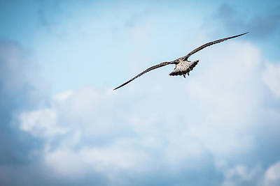 Photograph - Freedom ......... by Fotografie Jeronimo