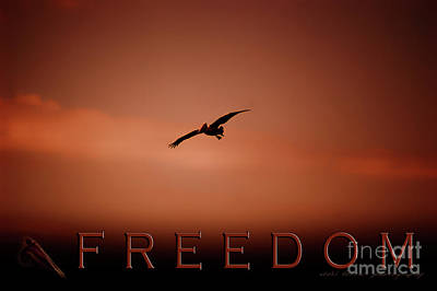 Photograph - Freedom 2 by Vicki Ferrari