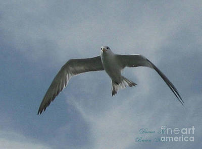 Art Print featuring the photograph Freedom by Donna Brown
