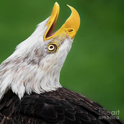 Photograph - Freedom by Eyeshine Photography