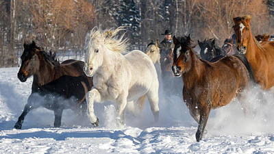 Photograph - Freedom In Motion by Jack Bell