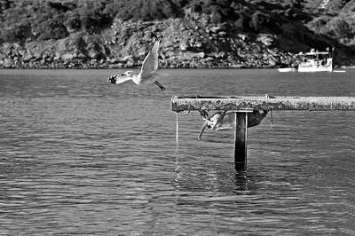 Photograph - Freedom Is A Seagull Name Black And White by Pedro Cardona Llambias