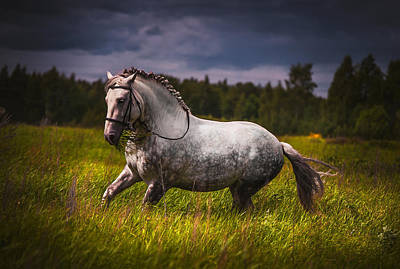 Gray Horses Photograph - Freedom by Jenny Rainbow