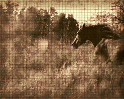 Wall Art - Photograph - Freedom Run After Rescue by Shannon Story