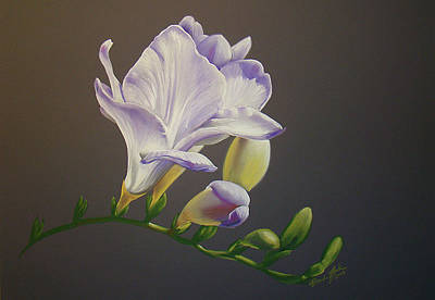 Freesia 1 Art Print by Brandi York