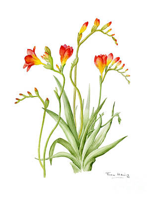 Spring Bulbs Painting - Freesia by Fran Henig
