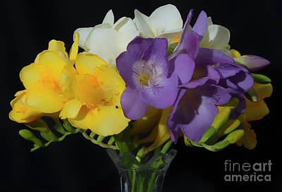 Photograph - Freesias Softened 2 by Glenn Franco Simmons