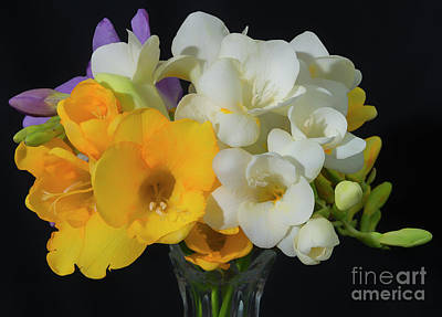 Photograph - Freesias Softened 3 by Glenn Franco Simmons