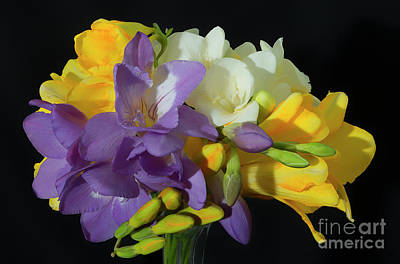 Photograph - Freesias Softened 4 by Glenn Franco Simmons