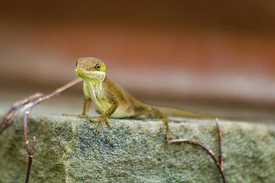 Lizards Photograph - Freeze  by Kathy Malecki