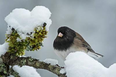 Photograph - Freezing - 365-336 by Inge Riis McDonald