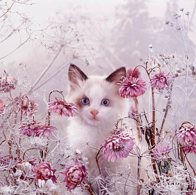 Photograph - Freezing Flower Fancy by Warren Photographic