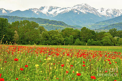 Photograph - French Alps Poppies by Stefano Carini