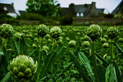 Photograph - French Artichokes by Eric Tressler