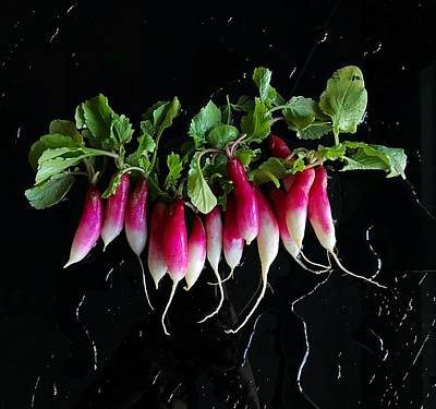 Photograph - French Breakfast Radishes by Sarah Phillips