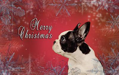 Adorable French Bulldog Puppy Photograph - French Bulldog Christmas Card by Waldek Dabrowski