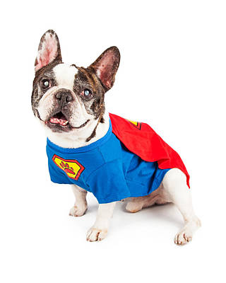 Super Hero Photograph - French Bulldog Dog In Super Hero Costume by Susan Schmitz