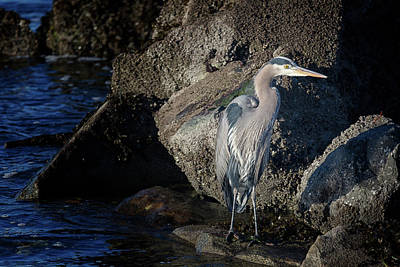 Print featuring the photograph French Creek Heron by Randy Hall