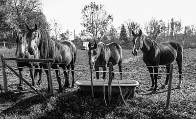 French Farm Horses Art Print by Georgia Fowler