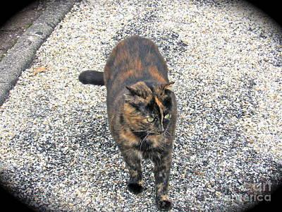 Photograph - French Feline by Barbara Plattenburg