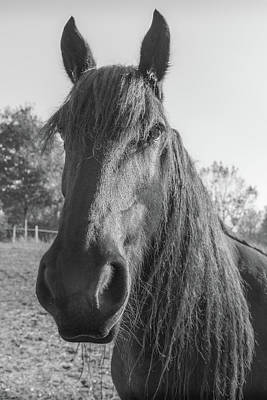 French Horse In Mono Art Print by Georgia Fowler