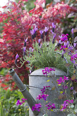 Flowerpots Photograph - French Lavender by Tim Gainey