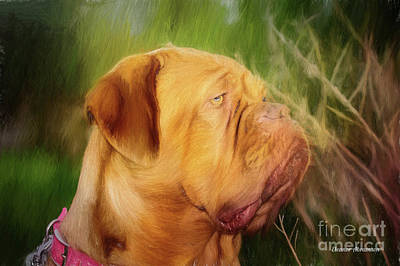 French Mastiff  Art Print