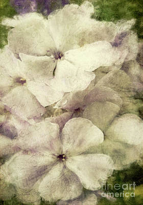 Photograph - French Phlox by Jean OKeeffe Macro Abundance Art