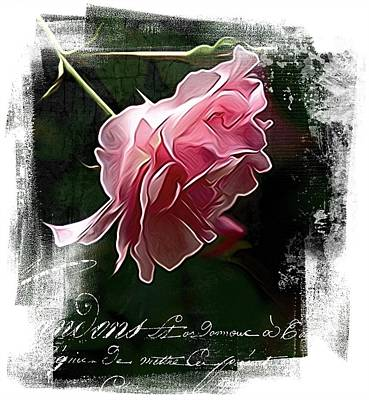 Photograph - French Pink by Alice Gipson