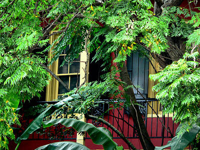 Photograph - French Quarter Foliage  by Kathy K McClellan