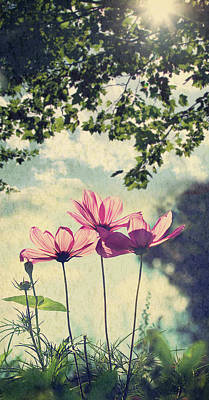 Uncultivated Photograph - French Wild Flowers by Kelly Sillaste
