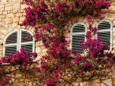 Photograph - French Windows by Steven Sparks