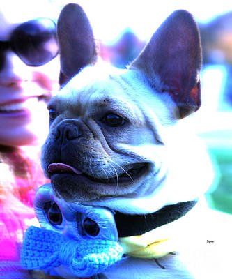 Cute French Bulldog Photograph - Frenchie Dressed For A Hot Date  by Steven Digman