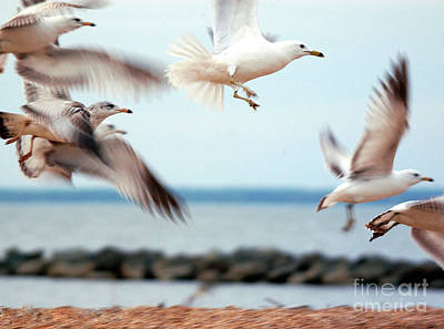 Frenzy Photograph - Frenzy by Clayton Bruster