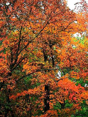 Photograph - Fresco Autumn Diptych Left by Ellen Barron O'Reilly