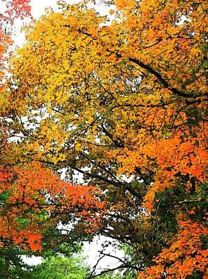 Photograph - Fresco Autumn Diptych Right by Ellen Barron O'Reilly