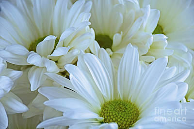 Photograph - Fresh Beauty by Ray Shrewsberry