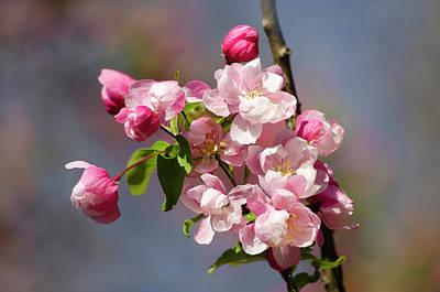Photograph - Fresh Blossoms by Ann Bridges