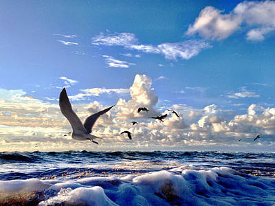 Photograph - Fresh Blue Yonder by Andrew Royston